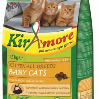 8001541004047-gheda-kiramore-kitten-all-breeds-baby-cats-1-5-kg